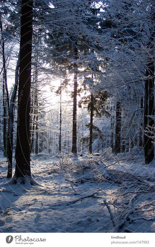 Wintermorgen Schnee Wald Baum weiß Licht Erholung ruhig