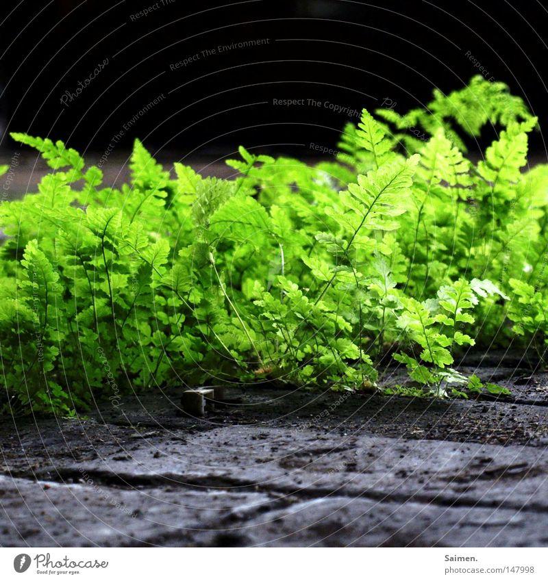 just green grün Blatt Leben Frühling Freiheit grau Stein hell Zusammensein dreckig frei Kraft frisch Stengel stark eng