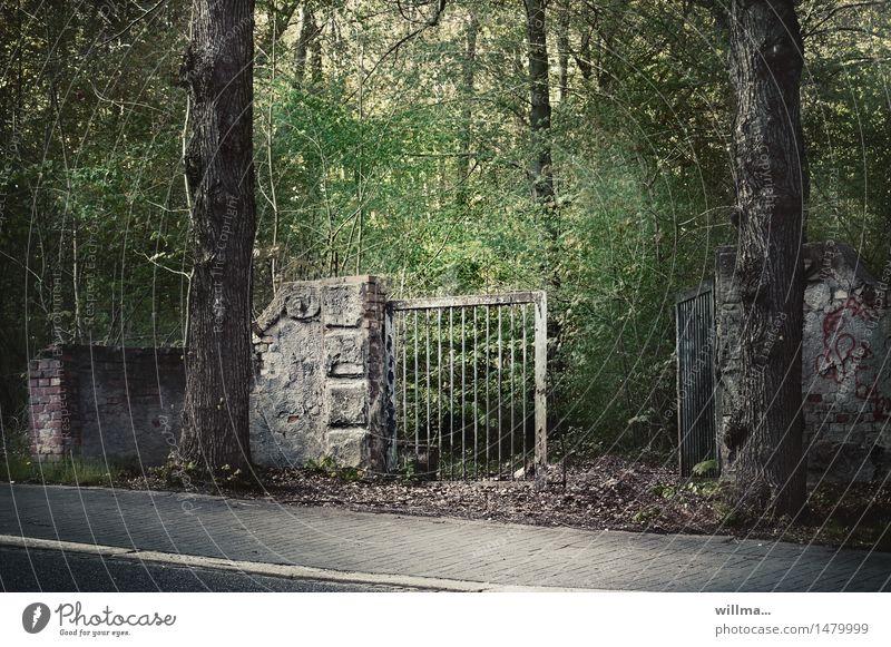 offene verwaldungsstelle Baum Park Wald Tor Eingangstor Mauerreste dunkel gruselig Verfall Vergänglichkeit verwildert verfallen Bürgersteig Unbewohnt ungepflegt