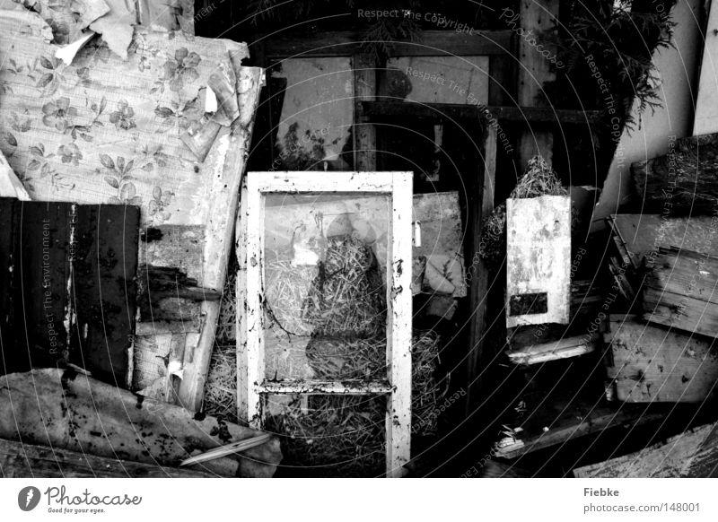 auf die Straße gesetzt ... alt weiß Blume schwarz Fenster Holz dreckig kaputt Vergänglichkeit Müll Möbel Tapete Holzbrett Fensterscheibe Schwarzweißfoto Spiegelbild