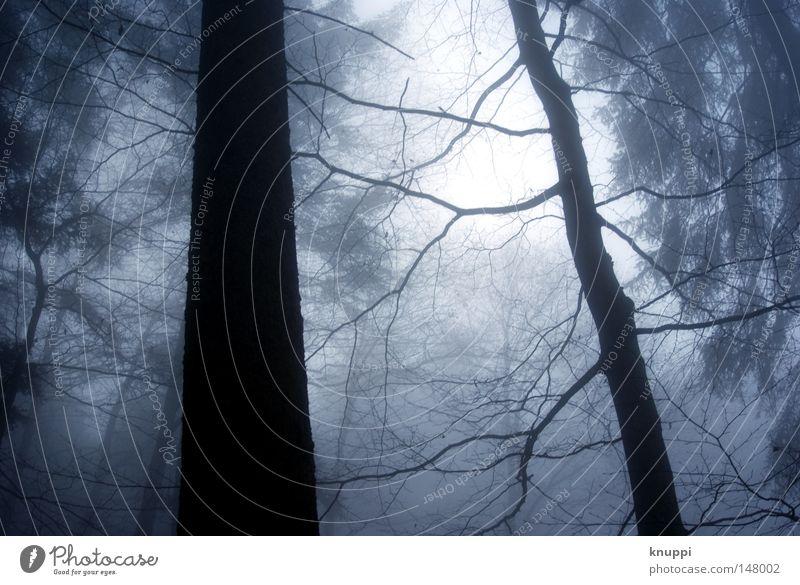 Herbstwald Natur alt blau Baum Winter ruhig Einsamkeit schwarz Wald kalt dunkel Umwelt Ausflug Nebel groß
