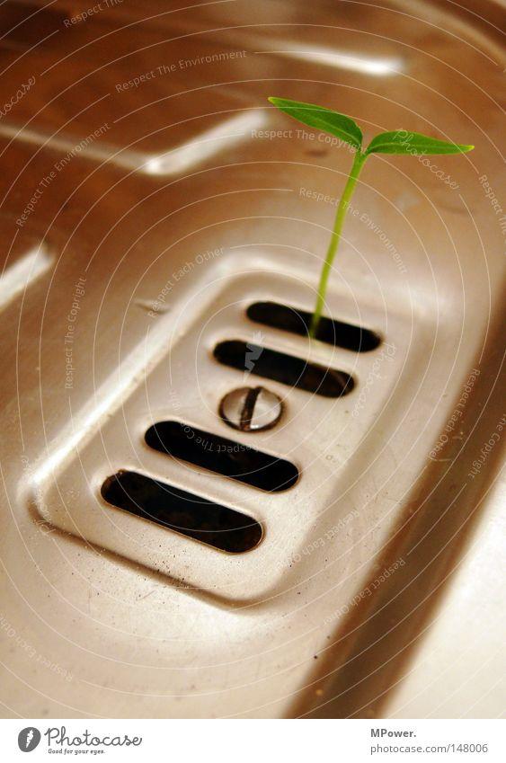 Küchenkeimling grün Blatt Wachstum Küche Stillleben Schraube Abfluss Küchenspüle Keim Edelstahl Unkraut