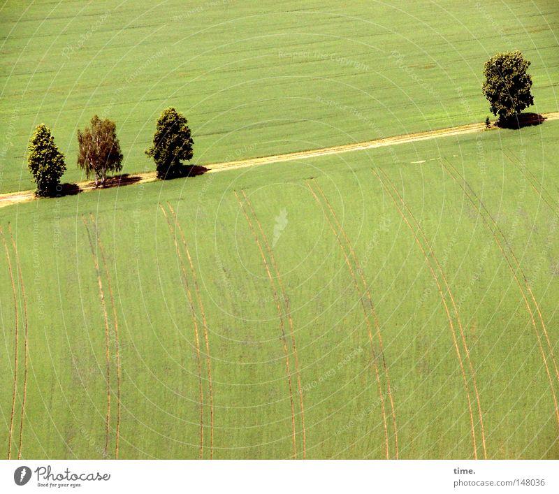 Standpauke Baum Feld Wege & Pfade Sandweg parallel Farbfoto Außenaufnahme Menschenleer Morgen Schatten Vogelperspektive 4 gekrümmt grün Fußweg