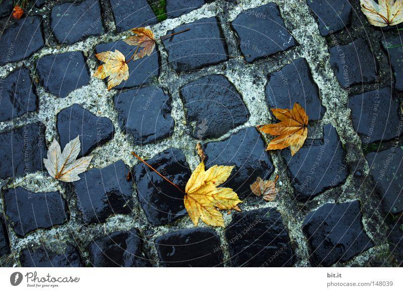 BLATT GEPFLASTERT II Umwelt Herbst Wetter Regen Blatt Straße Wege & Pfade liegen dunkel nass gelb grau schwarz Vergänglichkeit Kopfsteinpflaster Asphalt