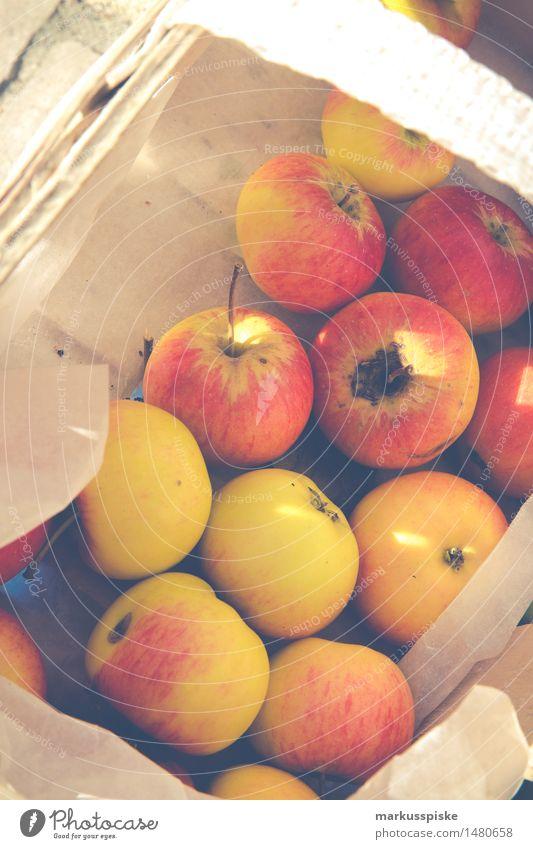frische bio ernte äpfel Natur Ferien & Urlaub & Reisen Stadt Pflanze Baum Gesunde Ernährung gelb Essen Gesundheit Garten Lebensmittel Frucht Tourismus