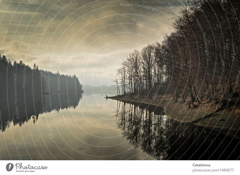 Neujahrsspaziergang Natur Pflanze Wasser Landschaft Wolken Winter dunkel schwarz kalt Bewegung grau Schwimmen & Baden See braun gehen Horizont