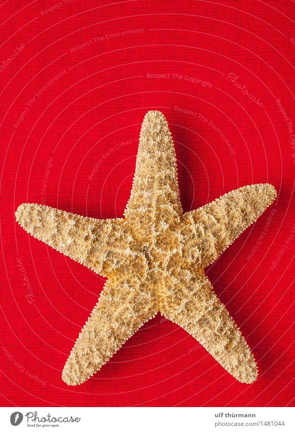 Seestern Ferien & Urlaub & Reisen Sommer Sommerurlaub Strand Meer Wohnung Dekoration & Verzierung Bad Umwelt Natur Wasser Tier maritim braun rot Tourismus
