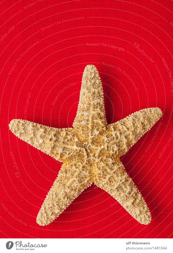 Seestern Natur Ferien & Urlaub & Reisen Sommer Wasser Meer rot Tier Strand Umwelt braun Wohnung Tourismus Dekoration & Verzierung Bad Sommerurlaub maritim