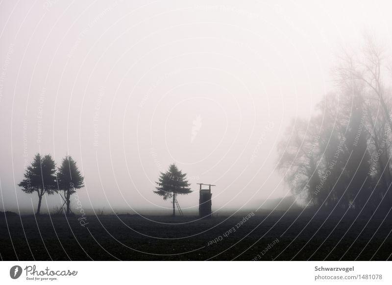 Waidmannsheil Natur Pflanze Landschaft Einsamkeit ruhig Umwelt kalt Traurigkeit grau Zufriedenheit Nebel Feld sitzen warten Trauer geheimnisvoll