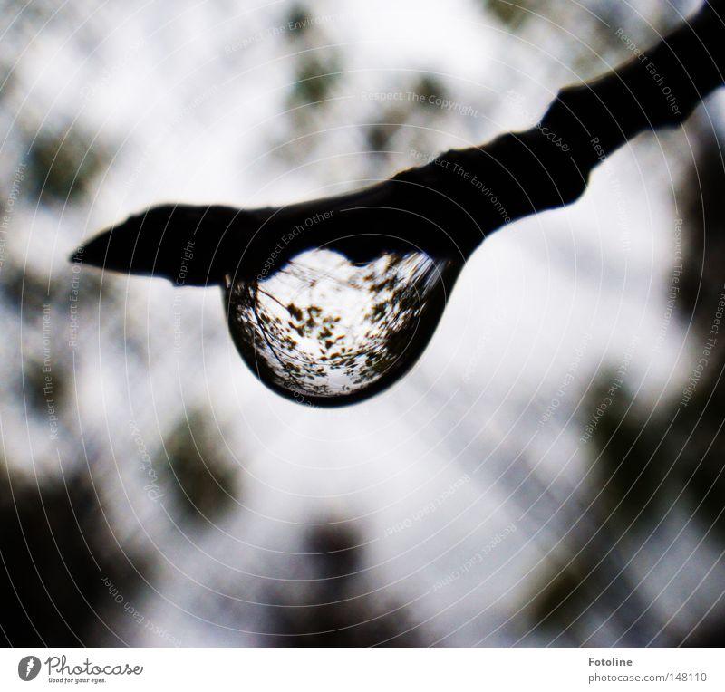 Herbstregen Wald Teich Regen herbstlich kalt nass Wolken Ast Baum Jahreszeiten Wassertropfen Lupe Blütenknospen