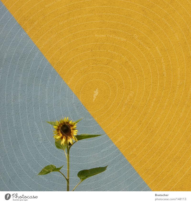 YES WE CAN. Hoffnung einzeln Sonnenblume Wunsch Hoffnungsanker Hoffnungsstrahl Politik & Staat grün Bündnis 90 Bioprodukte Biologische Landwirtschaft biologisch