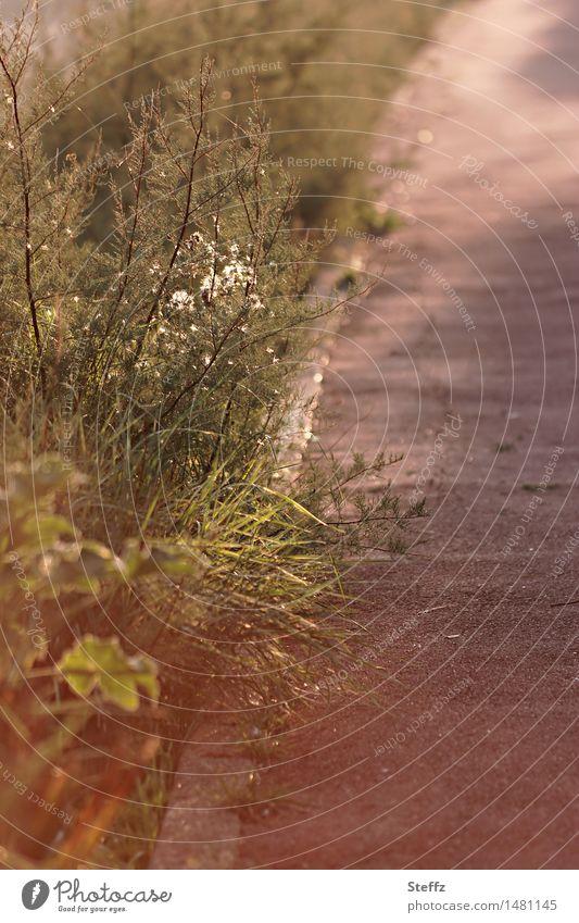 Licht und Schatten am Wegesrand Gartenpflanzen Sträucher Lichtschein Lichtschimmer heimisch Gartenweg Fußweg achtsam Achtsamkeit ruhig stiller Moment Wegrand