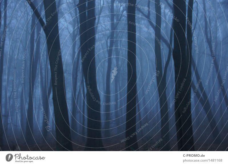 Wer hat Angst im dunklen Wald? Natur Herbst Winter schlechtes Wetter Nebel Baum bedrohlich dunkel gruselig kalt blau Traurigkeit Einsamkeit geheimnisvoll