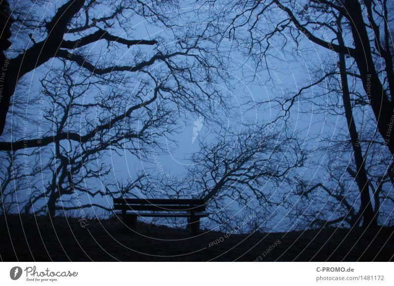 Menschenleer Umwelt Himmel Baum Garten Wiese Wald Traurigkeit Trauer Tod Einsamkeit Vergänglichkeit Bank Winter Farbfoto Gedeckte Farben Außenaufnahme Dämmerung