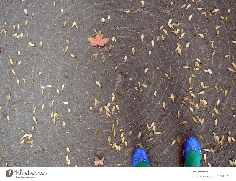 herbst Frau Natur grün blau Blatt gelb Straße Farbe Herbst Wege & Pfade Fuß Schuhe orange Hintergrundbild Beton Spaziergang