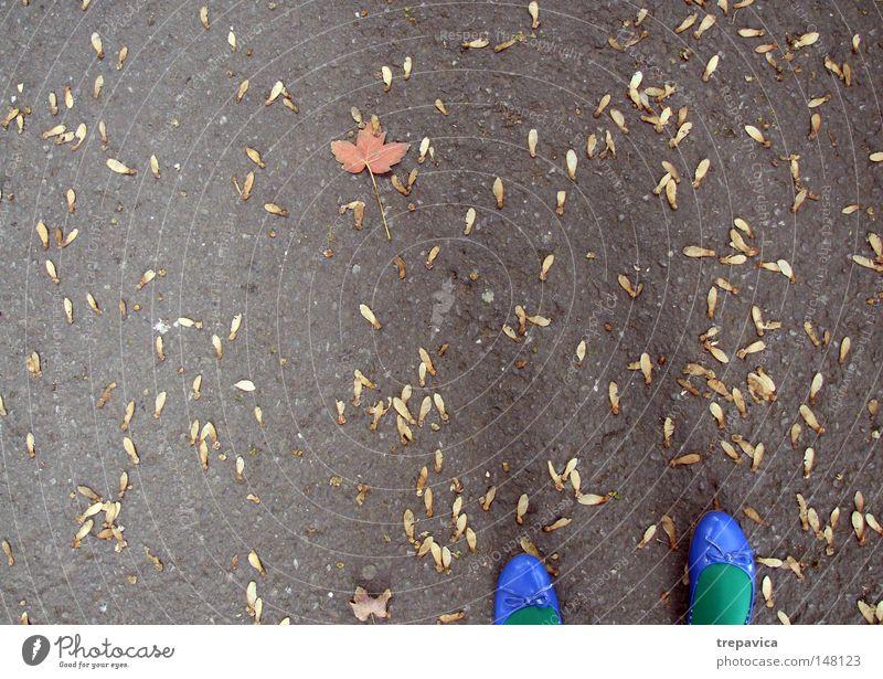herbst Schuhe blau grün Herbst Frau September Beton Blatt gelb orange Asphalt mehrfarbig Oktober November Farbe Herbstfärbung Herbstlaub Hintergrundbild