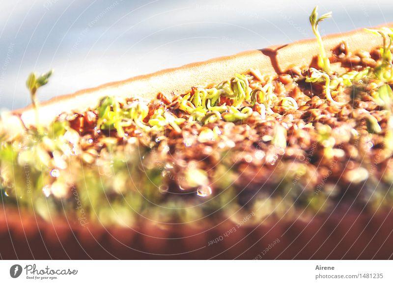 700 | Ich möcht' es sä'n auf jedes frische Beet Lebensmittel Salat Salatbeilage Kräuter & Gewürze Ernährung Bioprodukte Vegetarische Ernährung Umwelt Kresse