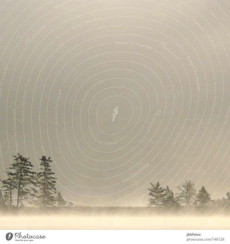 Nebel Himmel weiß Baum Freude Winter Ferien & Urlaub & Reisen Einsamkeit dunkel kalt Schnee Herbst Holz grau Denken hell Angst