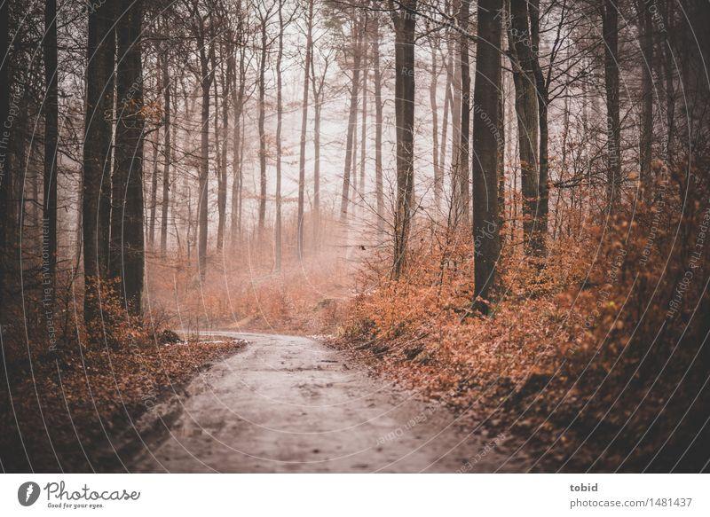 Trübe Tage #2 Natur Pflanze schlechtes Wetter Nebel Baum Gras Sträucher Wald Hügel Wege & Pfade dunkel kalt Einsamkeit Herbst herbstlich trist welk Farbfoto