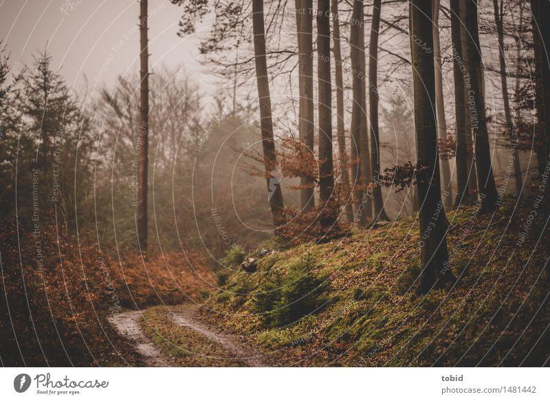 Trübe Tage #1 Natur Herbst Winter schlechtes Wetter Nebel Baum Gras Sträucher Moos Wald Hügel Wege & Pfade bedrohlich dunkel kalt Einsamkeit trist welk Farbfoto