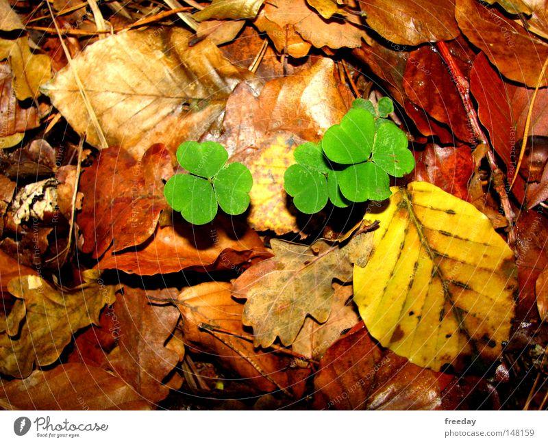 ::: Viel Glück! ::: Natur grün Farbe Blatt Umwelt gelb Herbst Glück Farbstoff Park Erfolg Perspektive Boden Stengel ökologisch Herbstlaub