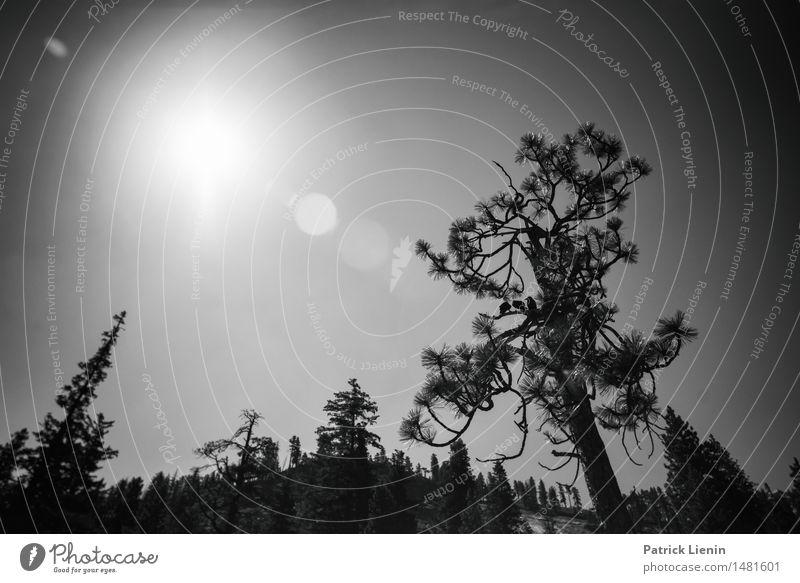 Dark Day Ferien & Urlaub & Reisen Abenteuer Sommer Berge u. Gebirge wandern Umwelt Natur Landschaft Tier Urelemente Himmel Sonne Sonnenlicht Klima Klimawandel