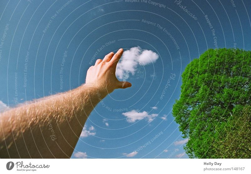 Hab dich... Wolken Himmel blau Schönes Wetter Blauer Himmel Watte Schaf Altokumulus floccus Baum grün Arme Finger Hand ausgestreckt greifen Baumkrone