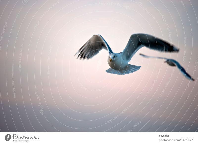 unterwegs Tier Wildtier Vogel 2 Bewegung fliegen Blick einfach Zusammensein Unendlichkeit hell kalt maritim natürlich Neugier klug Geschwindigkeit schön