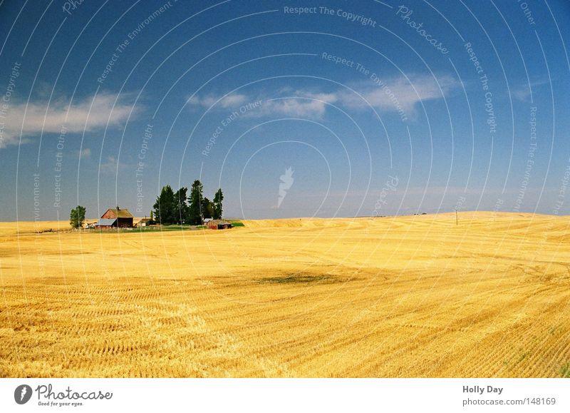 Old McDonald had a farm... schön Himmel Baum blau Sommer Ferien & Urlaub & Reisen Haus Wolken Kornfeld gelb Ferne Wärme Feld Hintergrundbild gold Horizont