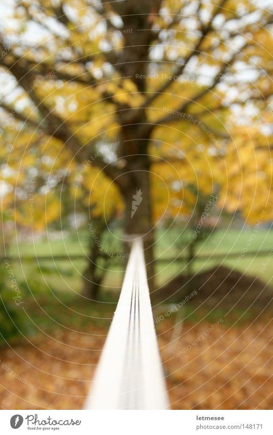 Slackline Baum Blatt gelb Herbst Garten braun Zufriedenheit Wohnung Angst Klettern leicht Spannung Nervosität Ahorn Höhe Bergsteiger
