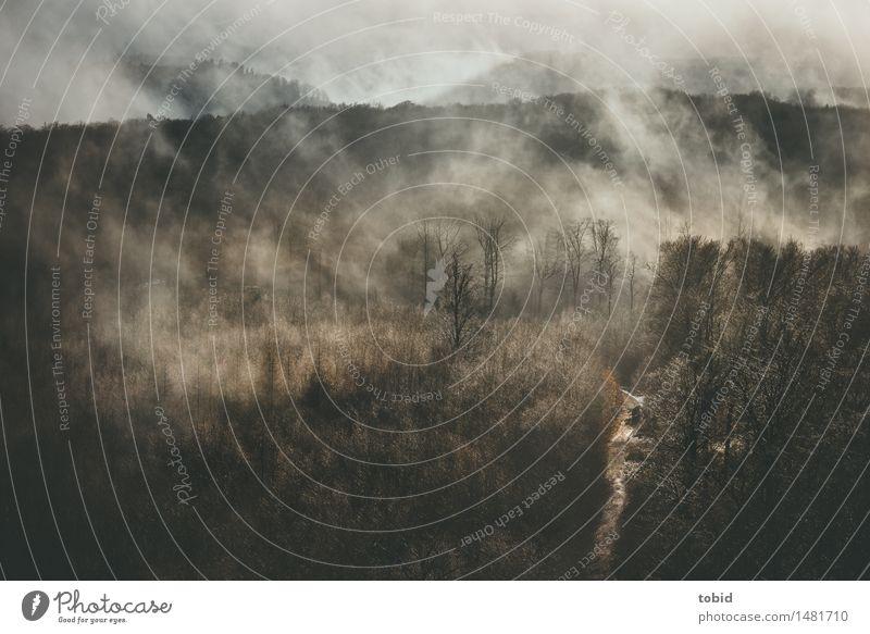 Sonnenschein nach dem Regen Natur Landschaft Pflanze Wolken Herbst Winter Schönes Wetter Nebel Baum Wald Hügel glänzend Wege & Pfade dünn kahl herbstlich weit