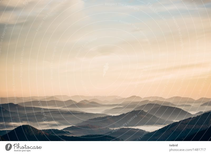 Gipfelmeer Himmel Natur Einsamkeit Wolken Ferne Wald Horizont Nebel Idylle Schönes Wetter Hügel Unendlichkeit Nebelmeer