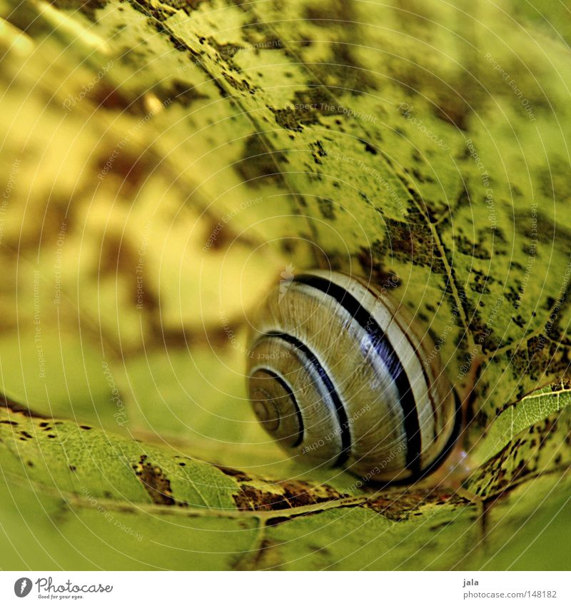 schutzbedürftig grün Blatt gelb Herbst Schutz Schnecke Schneckenhaus