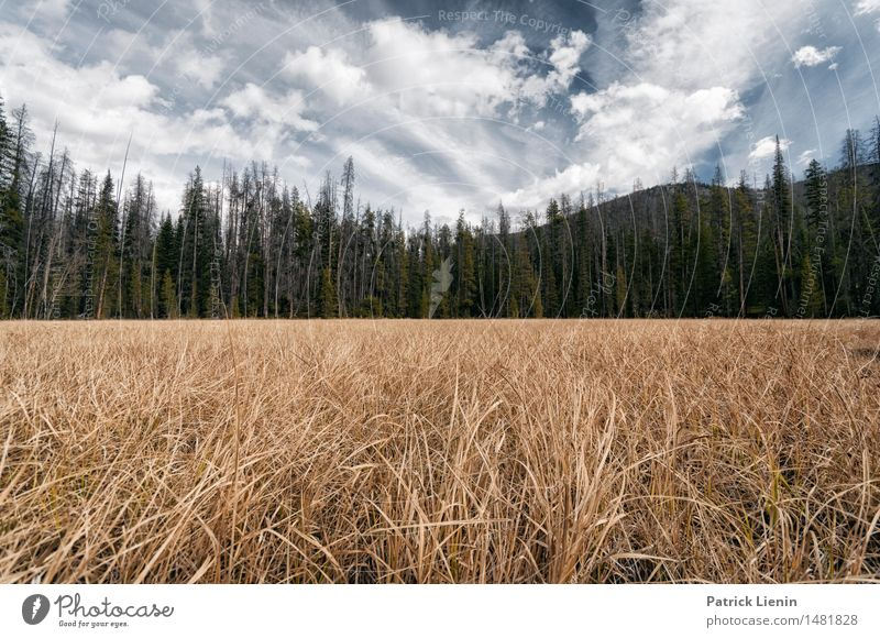Colorado Himmel Natur Ferien & Urlaub & Reisen Pflanze Baum Erholung Landschaft Einsamkeit Wolken Wald Berge u. Gebirge Umwelt See Felsen Park Wetter