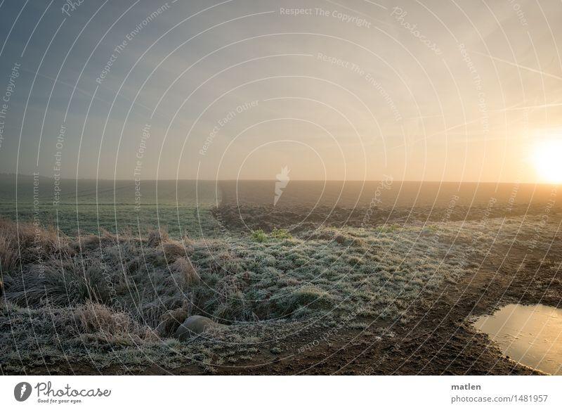 kühler Morgen Landschaft Pflanze Himmel Wolkenloser Himmel Horizont Sonnenaufgang Sonnenuntergang Winter Wetter Schönes Wetter Eis Frost Wiese Feld frieren blau
