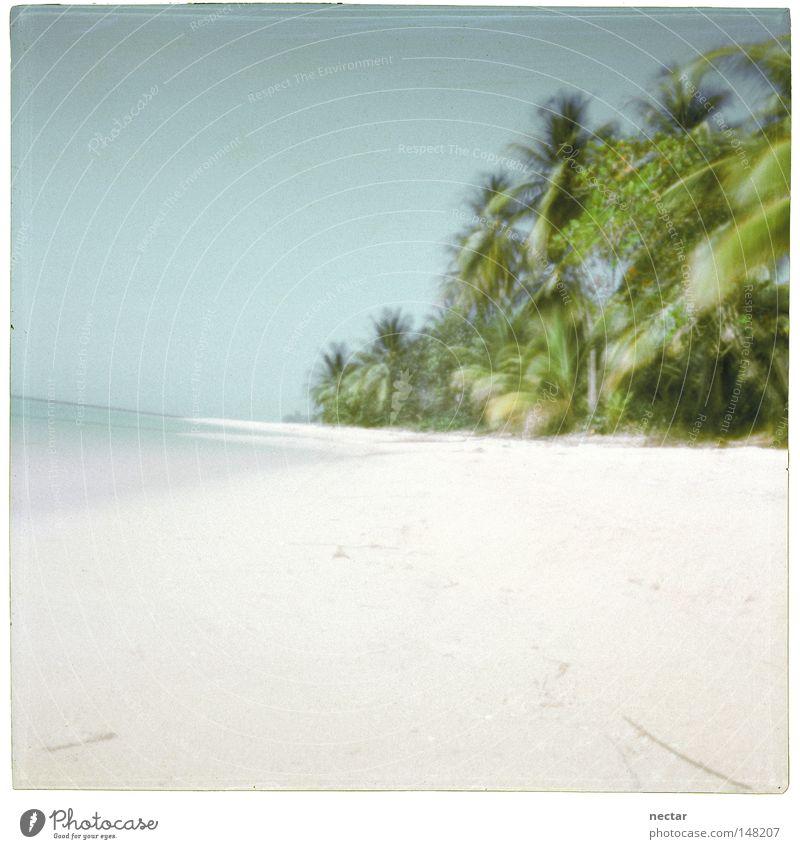 Beach Of Silence Licht Wasser Meer Strand Palme Sommer Ferien & Urlaub & Reisen ruhig Frieden Zen Buddha Landschaft Landschaftsformen rosa Kraft Konzentration