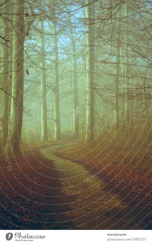 waldweg Umwelt Natur Landschaft Erde Himmel Herbst Klima Schönes Wetter Nebel Pflanze Baum Sträucher Blatt Grünpflanze Wildpflanze Wald Fußweg authentisch kalt