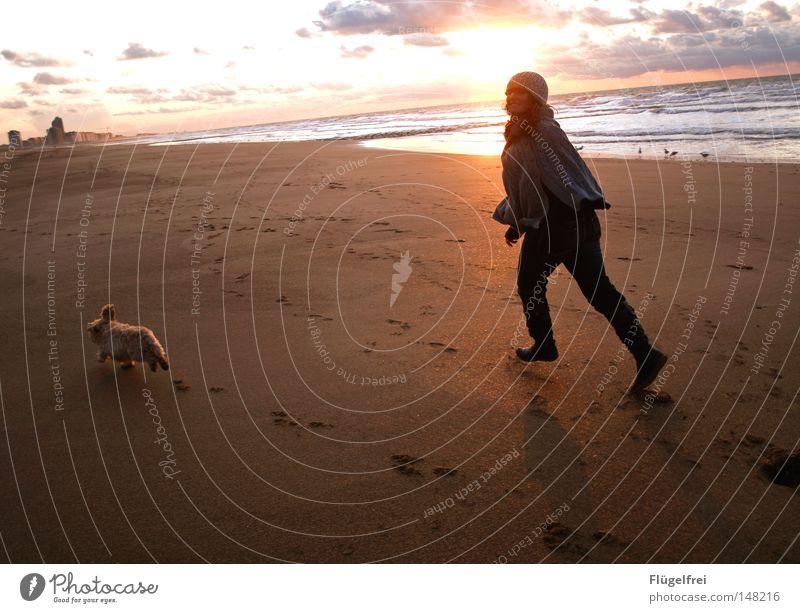 Freiheit Freude Spielen Sonne Strand Meer Haus feminin Freundschaft Jugendliche Ohr Beine Sand Himmel Wolken Wärme Hochhaus Hund Bewegung fangen fliegen