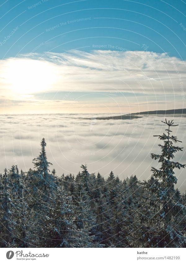 Über den Wolken..... Himmel Natur blau Baum Landschaft Tier Winter Wald kalt Schnee Stimmung Horizont Wetter Nebel Luft