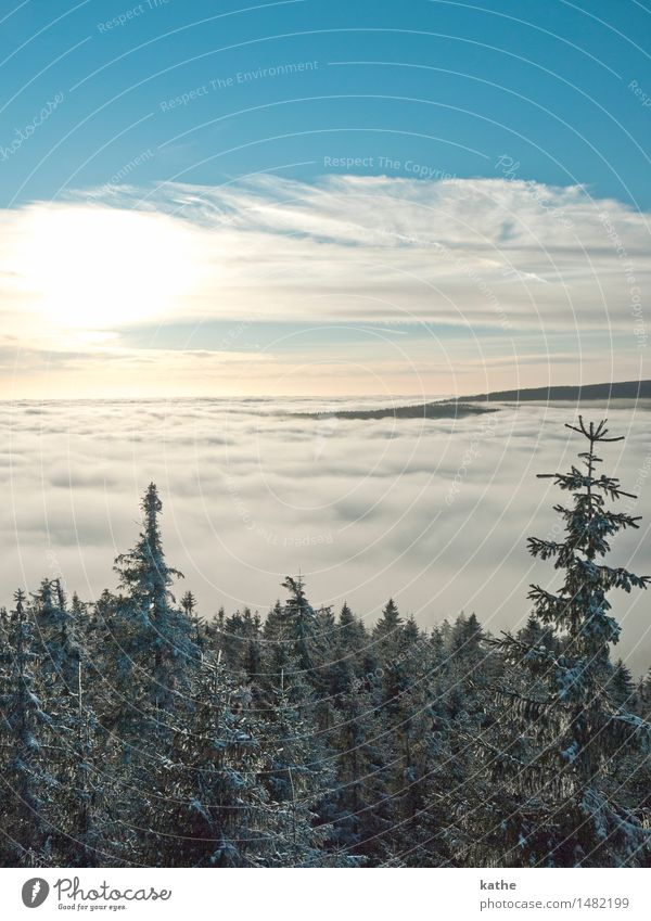 Über den Wolken..... Natur Landschaft Tier Luft Himmel Horizont Sonnenaufgang Sonnenuntergang Winter Wetter Nebel Eis Frost Schnee Baum Wald Hügel Gipfel
