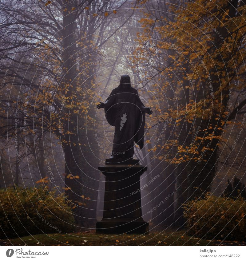 offenbar Mensch Mann Hand Baum Herbst Leben Tod Religion & Glaube Rücken Nebel Finger Kirche Trauer Bildung Frieden Flüssigkeit