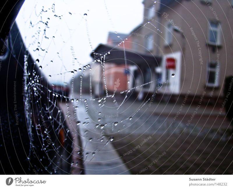 i think i spider! blau Straße kalt PKW Wassertropfen Studium KFZ fahren Tropfen Netz Spiegel frieren Tau Spinne Spinnennetz Tankstelle