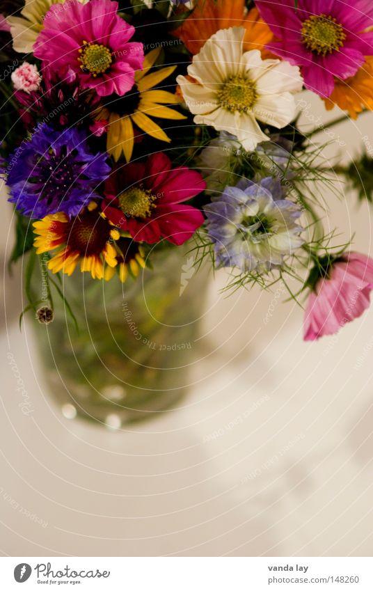 Novemberstrauß mehrfarbig Freude Sommer Dekoration & Verzierung Tisch Wohnzimmer Valentinstag Muttertag Geburtstag Frühling Herbst Blume Blüte Blumenstrauß Glas