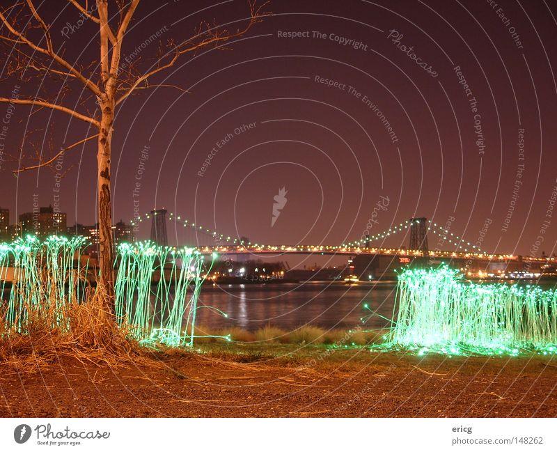 Verstrahlt Brücke Baum New York City kahl Gras violett grün Amerika USA