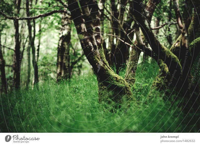 Little Green Umwelt Natur Landschaft Frühling Sommer Baum Gras Park Wald Urwald Schottland Wachstum Freundlichkeit Gesundheit positiv grün Lebensfreude Schutz