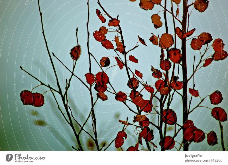Herbstsonntag Himmel Baum ruhig Blatt Farbe kalt grau Traurigkeit Nebel trist Ast Zweig kahl Ödland Laubbaum