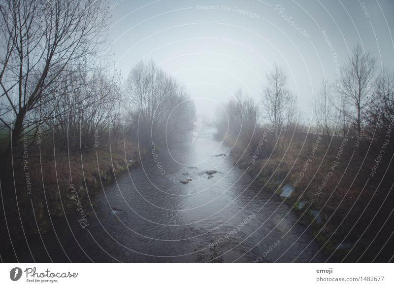 ein Hauch Winter Umwelt Natur Landschaft Herbst Klima Wetter schlechtes Wetter Unwetter Nebel Regen Sträucher Bach Fluss dunkel kalt trist grau Farbfoto