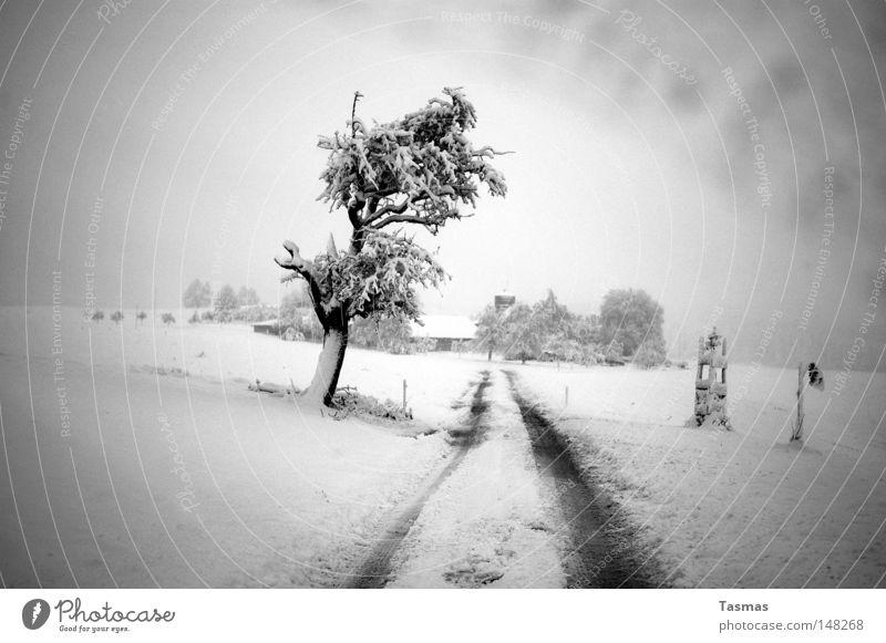 Verschneit Ferne Winter Schnee Baum Straße Wege & Pfade trist grau Langeweile Einsamkeit verloren Landstraße zudecken Schneedecke in grau Amerika zugeschneit