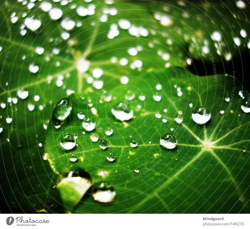 Liquid Jewels Tränen Regen Wassertropfen Tropfen Blatt glänzend Reflexion & Spiegelung grün Stern (Symbol) Makroaufnahme nass Leben frisch Licht Linie teilbar