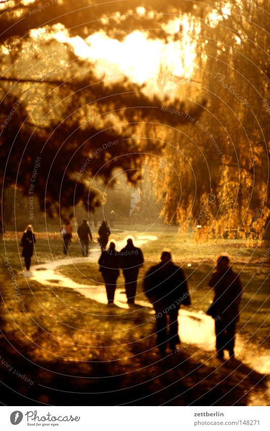 Goldener Tiergarten Herbst Oktober gold Sonne Dämmerung Sonnenuntergang Spaziergang Wege & Pfade Fußweg Lebenslauf Baum Wald Park Erholung Garten Mensch